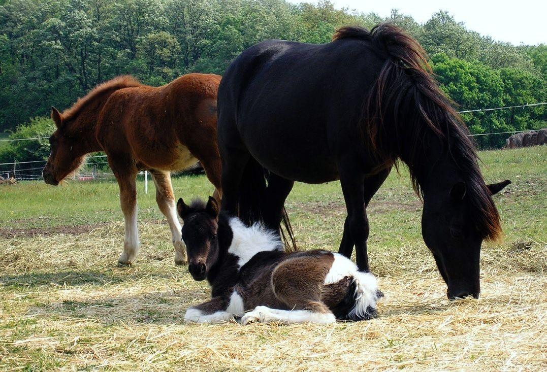 lovas közös kenőcs ár