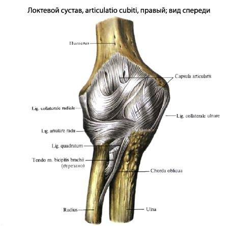 a karok ízületei megnagyobbodtak és fájnak közös epe közös kezelésre